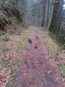 Hounds on the Barlow Trail