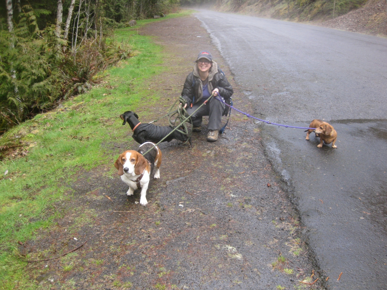 Hounds at Salmon River Trail