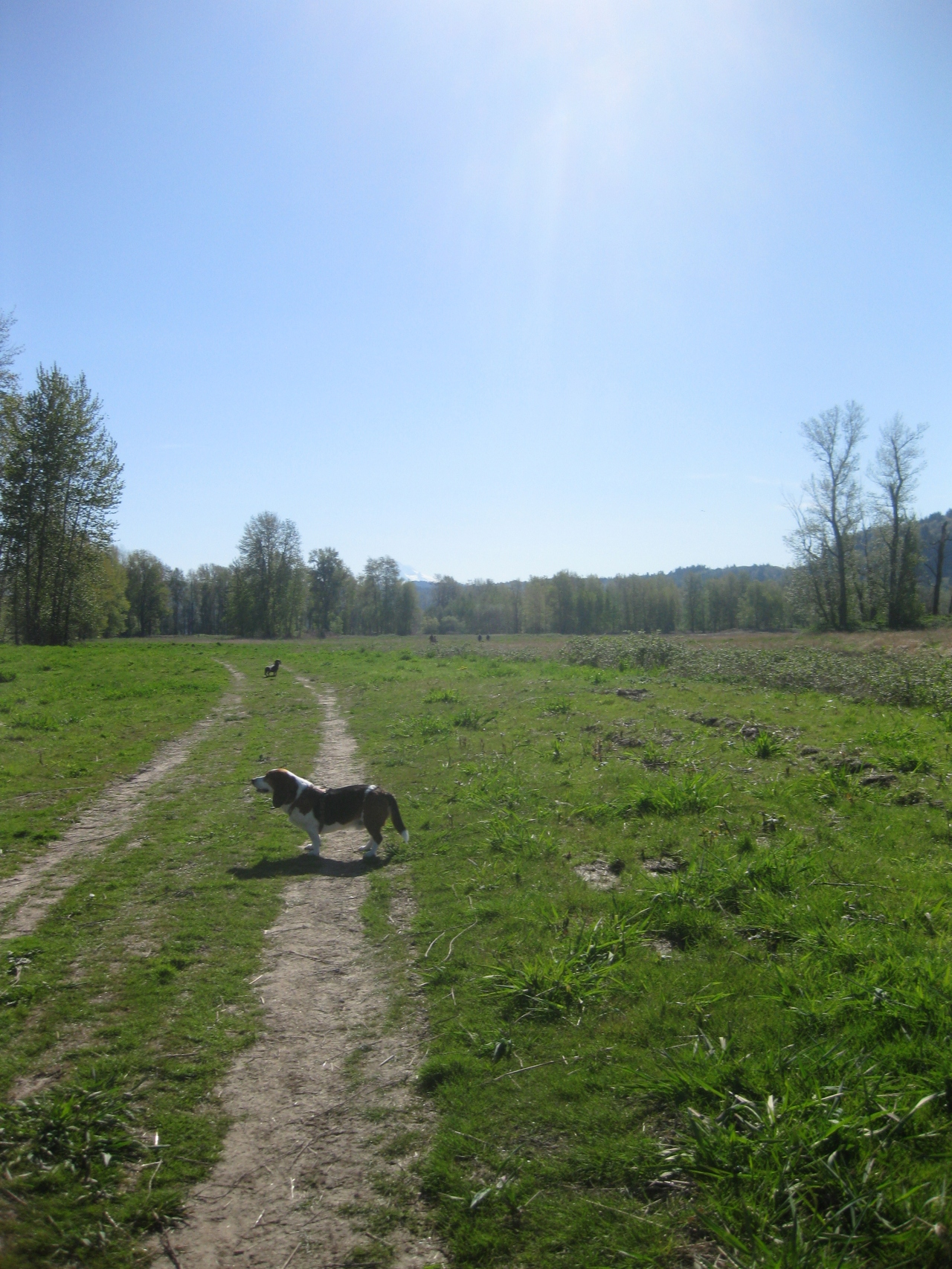 My Life With Dogs Blog My Favorite Thing Is Hounds Off Leash