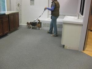 dog pics Delta and Joyce's class 016